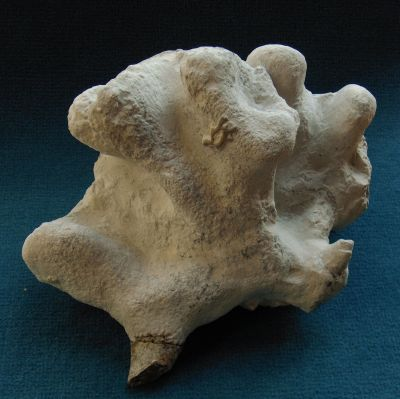 Locality: Teutonia, Misburg Height: 190 mm