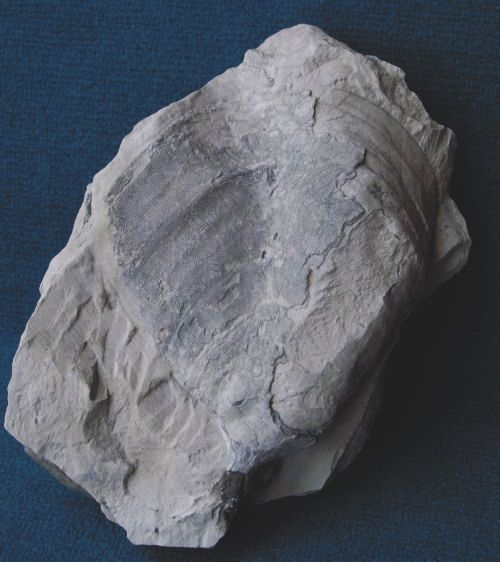 Locality: Teutonia. Height: 170 mm