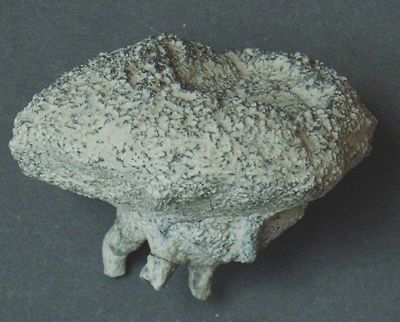 Locality. Teutonia, Misburg Width: 55 mm